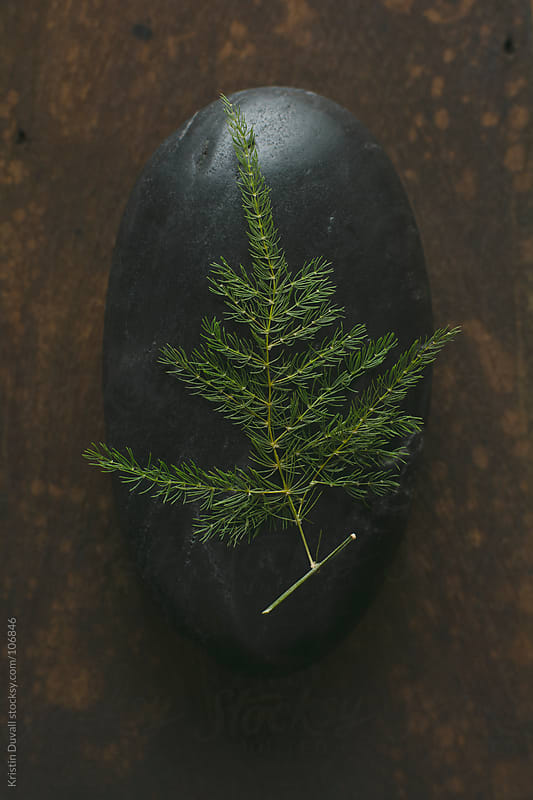 Christmas tree shaped fern on black stone by Kristin Duvall for Stocksy United