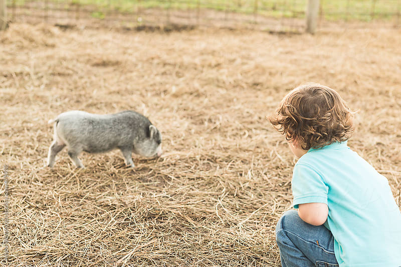 A Little Boy Calls To A Pig At A Petting Zoo by Alison Winterroth for Stocksy United