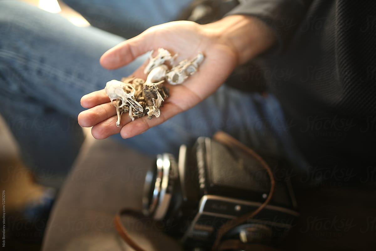 Squirrel Bones In Hand Stocksy United