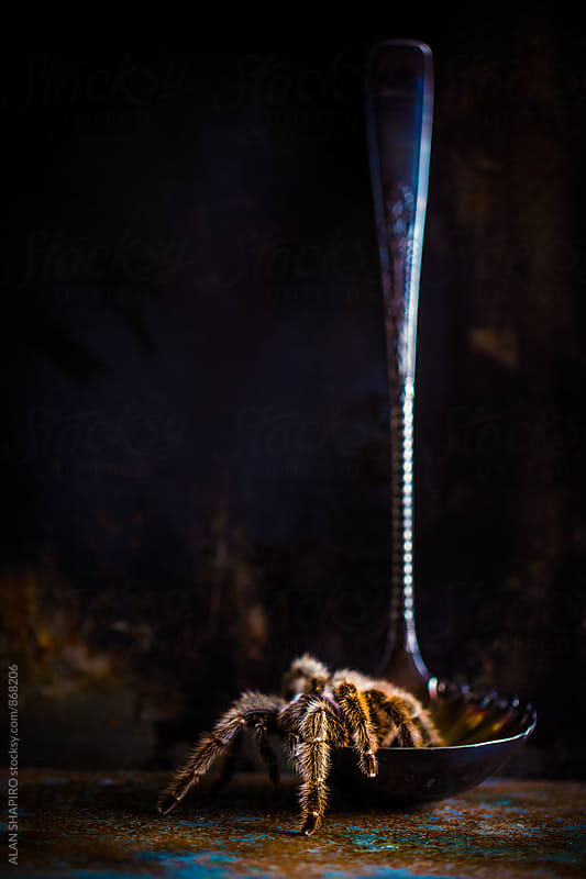(sorta) still life with tarantula and a ladle by alan shapiro for Stocksy United