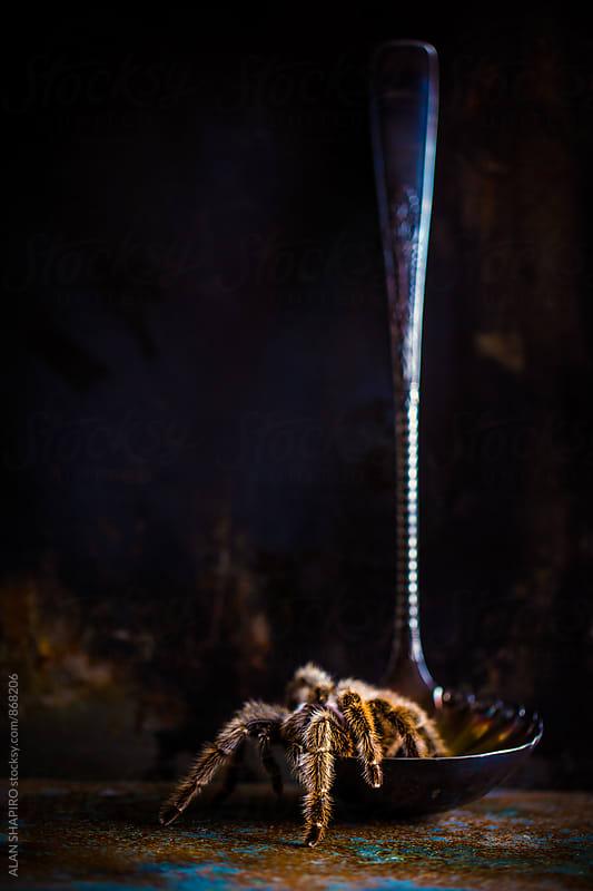 (sorta) still life with tarantula and a ladle by ALAN SHAPIRO for Stocksy United