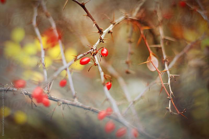Autumn by Eleonora Grasso for Stocksy United