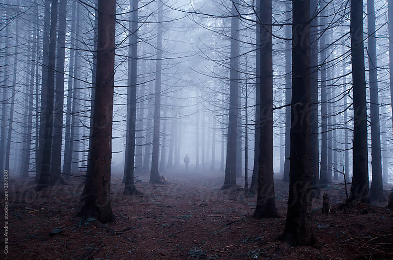 Man in mysterious forest with fog by Cosma Andrei for Stocksy United
