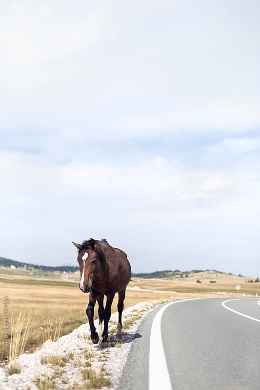 Wild horse walking next to the road by Jovana Milanko for Stocksy United