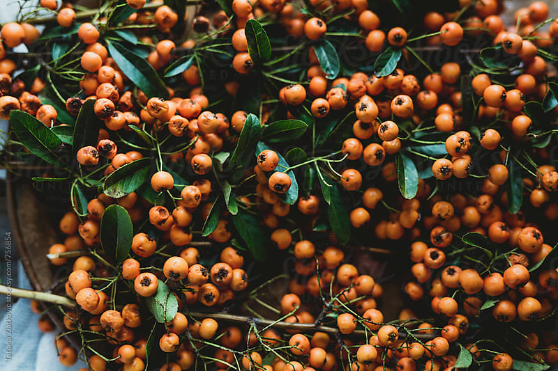 Orange pyracantha berries on a plate by Tatjana Ristanic for Stocksy United