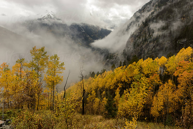 Misty mountains in the autumn with yellow aspens by Mick Follari for Stocksy United