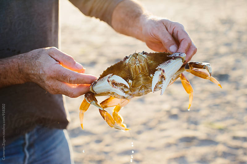 man holding a crab on the beach by Cameron Zegers for Stocksy United