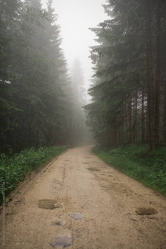 Road through the Forest  by Aleksandra Jankovic for Stocksy United