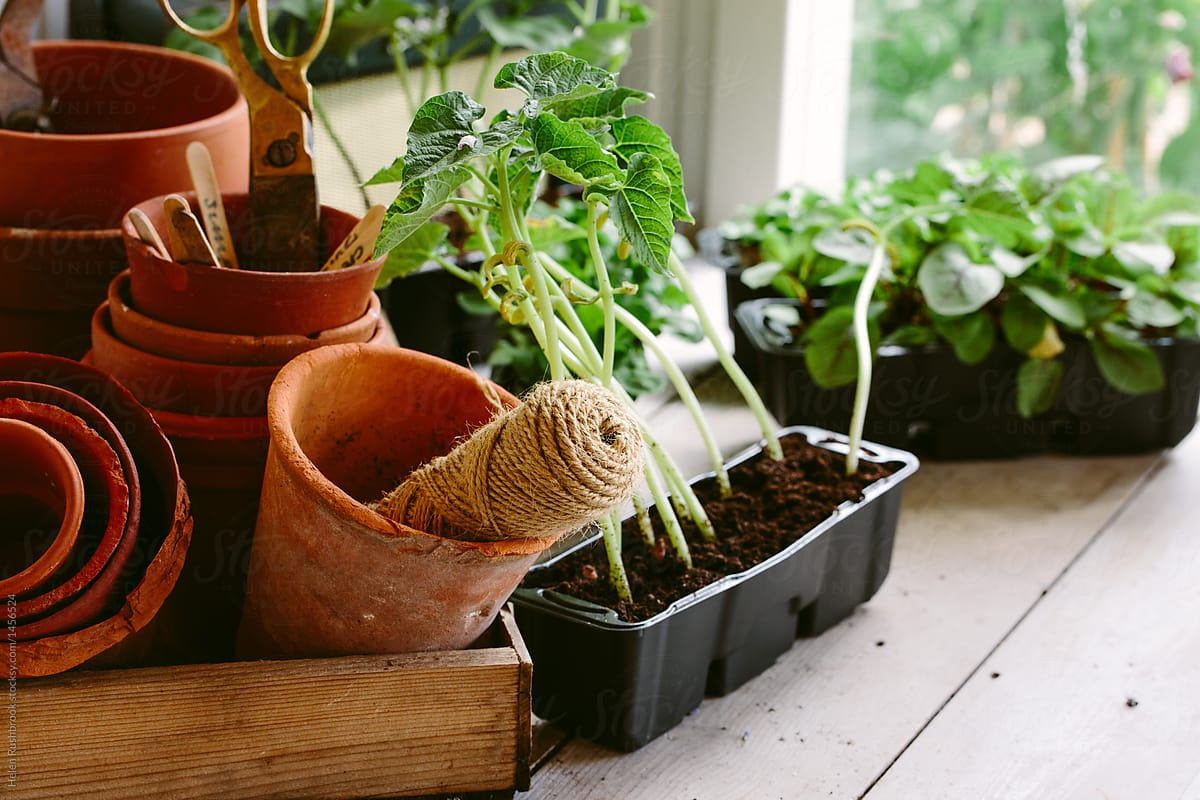 Pleasant Stock Photo Vegetable Seedlings On The Potting Bench Gmtry Best Dining Table And Chair Ideas Images Gmtryco