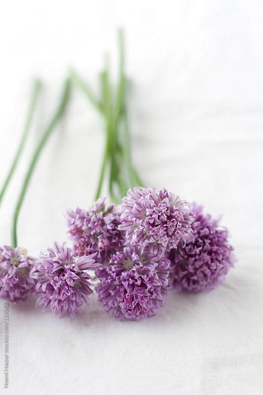 Couple of chive flowers  by Noemi Hauser for Stocksy United