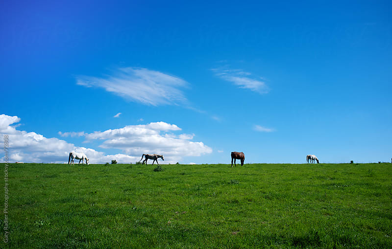 Horses on a Grassy Hill against a Blue Sky by Gary Radler Photography for Stocksy United