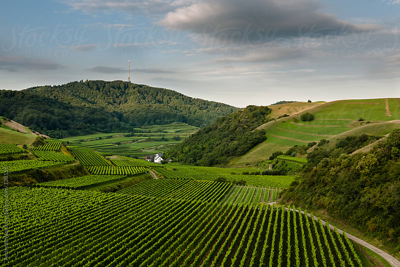 Vine Yards and Hills in German Kaiserstuhl by Andreas Wonisch for Stocksy United