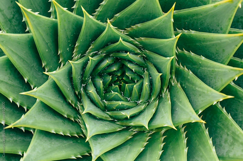 Succulent from Above by Cameron Zegers for Stocksy United