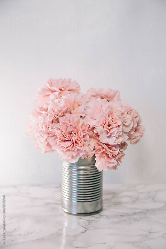 Pink Carnations by Ali Lanenga for Stocksy United