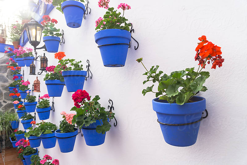 Potted flowers hanging on the wall by ACALU Studio for Stocksy United