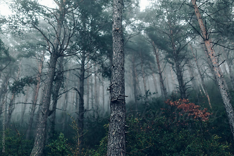 Foggy mountain road by Jordi Rulló for Stocksy United