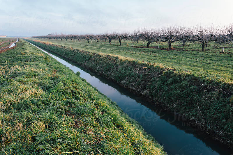 Stream running through farmland and a large commercial apple farm by Paul Phillips for Stocksy United