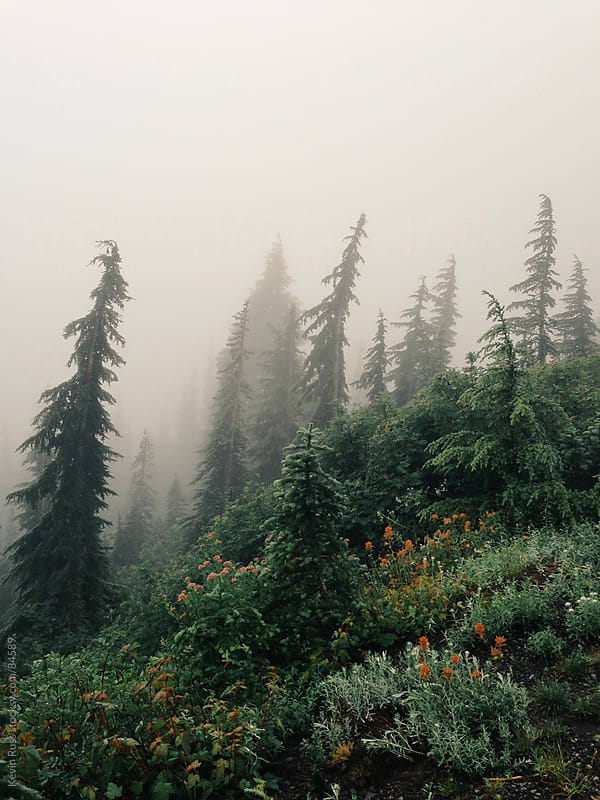 Foggy Trees and Wildflowers by Kevin Russ for Stocksy United