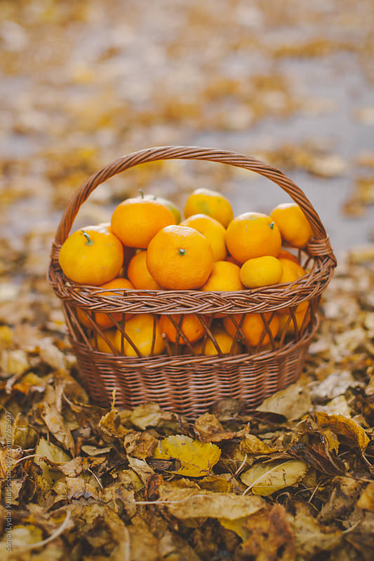 Bunch of tangerinas in a vintage knitted basket by Sanja (Lydia) Kulusic for Stocksy United