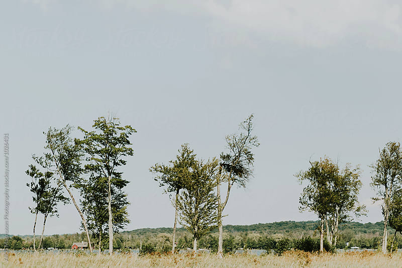 Trees and Field Along Inland Lake by Alicia Magnuson Photography for Stocksy United