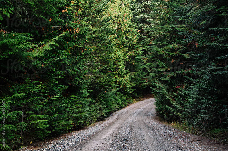 Rural mountain road surrounded by Cedar Trees by Justin Mullet for Stocksy United