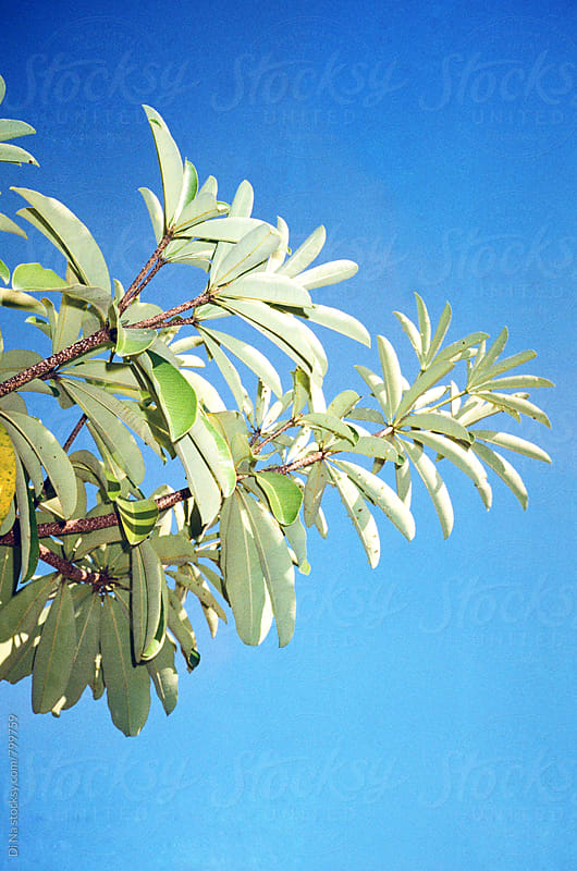 Exotic plant tree on sky background by Dina Lun for Stocksy United