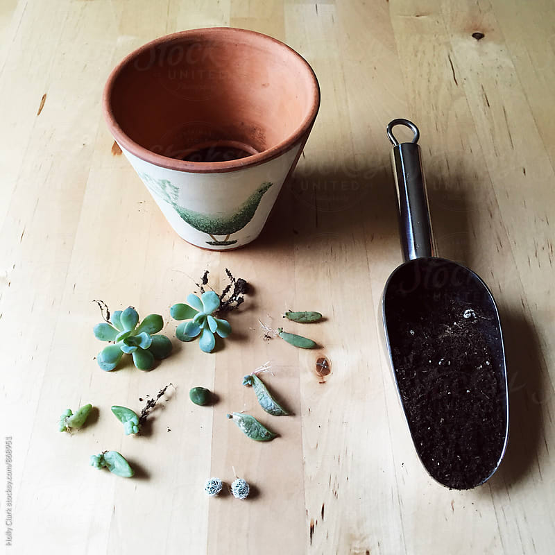 A planter, soil and succulents by Holly Clark for Stocksy United