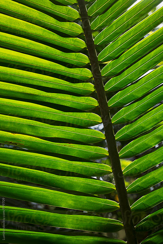 Palm Tree Leaf by Lumina for Stocksy United
