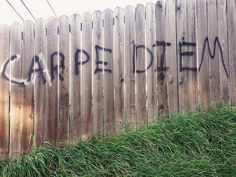 Carpe Diem, graffiti on a fence, seize the day by Tara Romasanta for Stocksy United