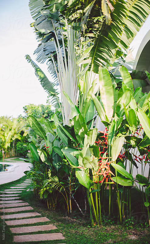 Tropical garden in the resort area by Nabi Tang for Stocksy United