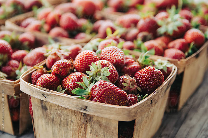 Fresh picked strawberries in garden boxes.  by Justin Mullet for Stocksy United