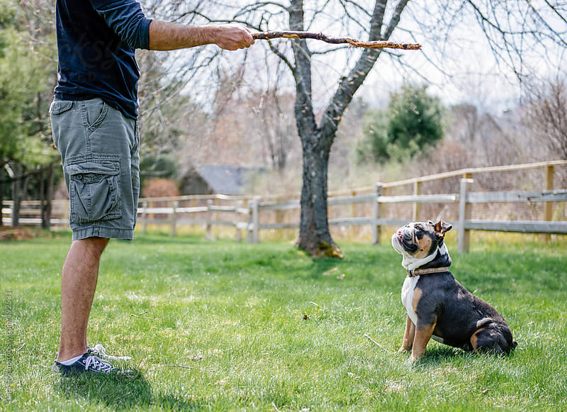 Dog owner plays with his English bulldog in the back yard by Cara Dolan for Stocksy United