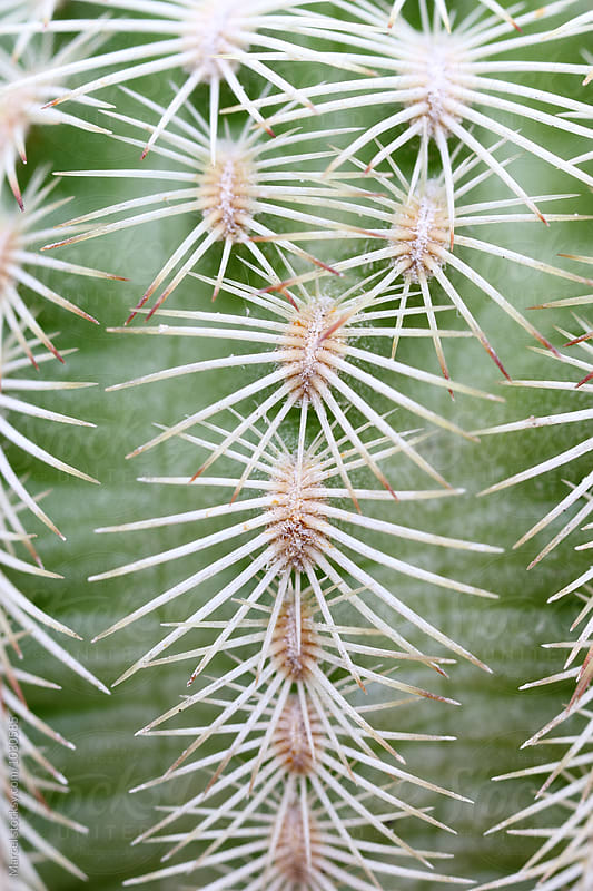 cactus thorns macro by Marcel for Stocksy United