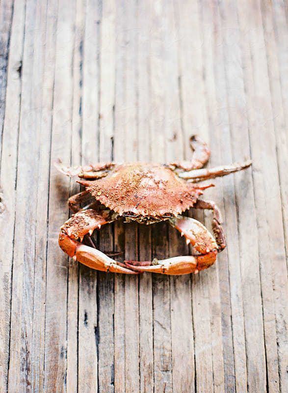 Summertime Crab Feast  by Vicki Grafton Photography for Stocksy United