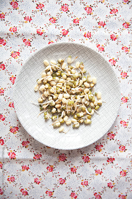 close up of mung bean sprouts on a retro saucer by Natalie JEFFCOTT for Stocksy United
