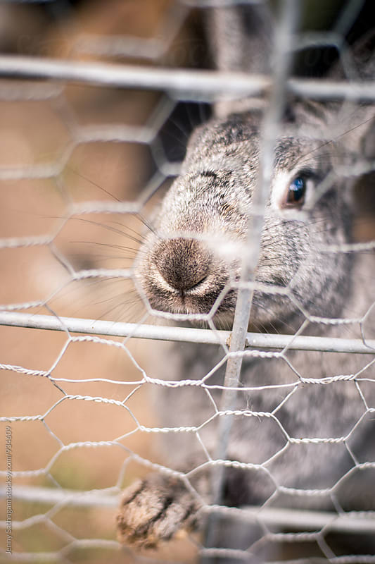 Curious Rabbit through the fence by Jenny Sathngam for Stocksy United
