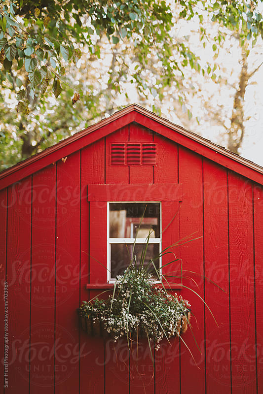 red barn with flowers under window by Sam Hurd Photography for Stocksy United