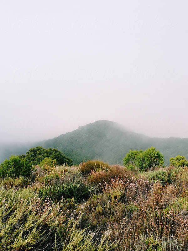 Foggy California Hills by Kevin Russ for Stocksy United