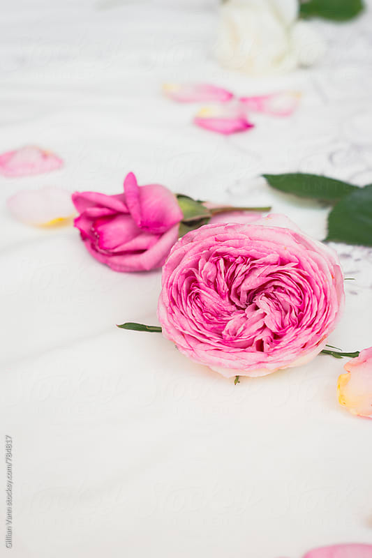 background roses scattered on a vintage embroidered linen tablecloth by Gillian Vann for Stocksy United