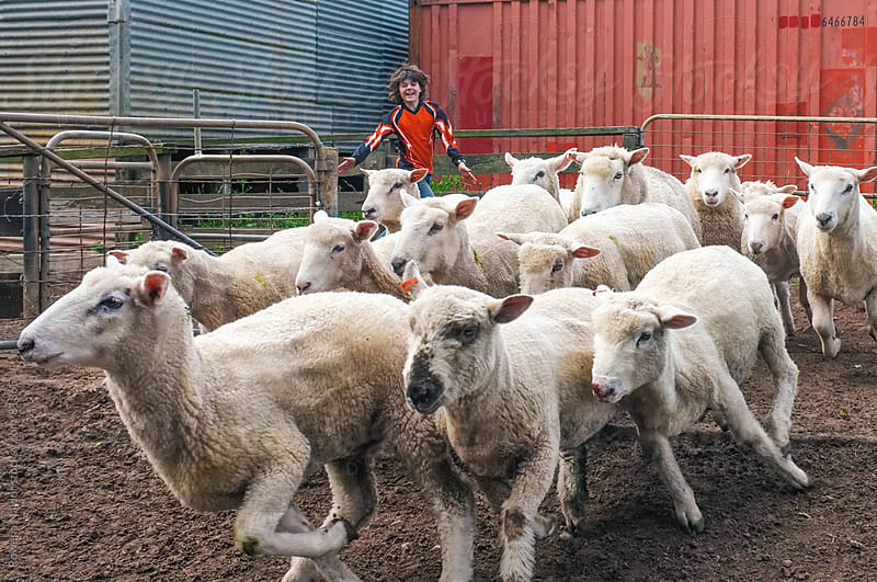 Young Boy Herding Sheep on Farm by Rowena Naylor for Stocksy United