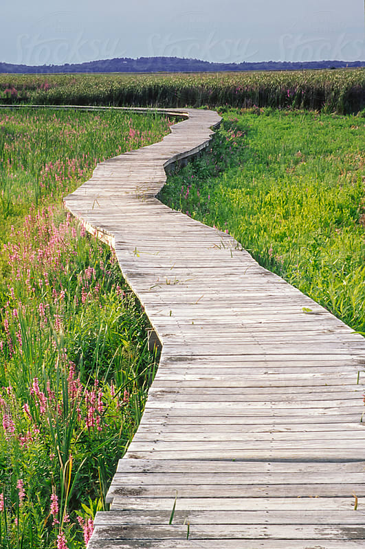 Boardwalk in Summer by Raymond Forbes LLC for Stocksy United