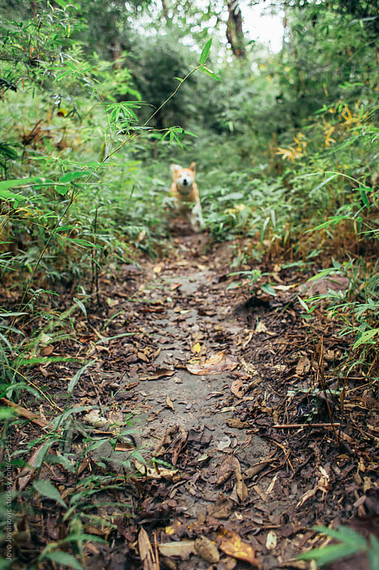Dog walking on jungle path in mountain by Jovo Jovanovic for Stocksy United