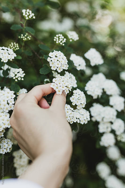 Hand picking spring flowers by Tatjana Ristanic for Stocksy United
