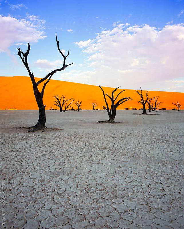 Dead trees and orange sand dunes, Dead Vlei,  Sossusvlei dune fi by Gavin Hellier for Stocksy United