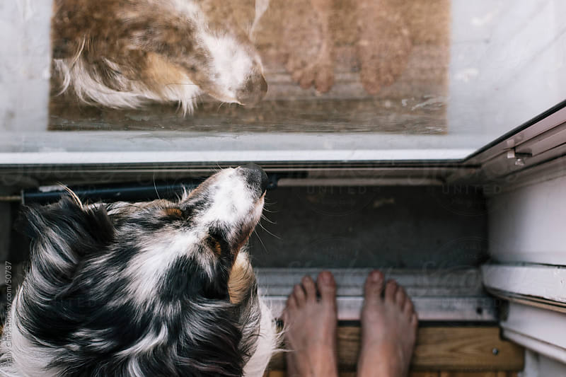 Looking down on a woman's feet and her pet dog's head staring out of a window. by Holly Clark for Stocksy United