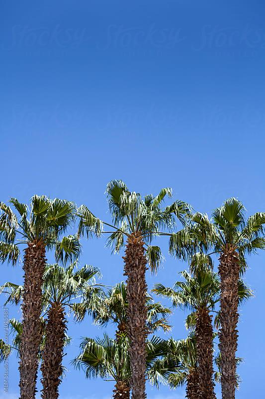 Palm trees by MEM Studio for Stocksy United