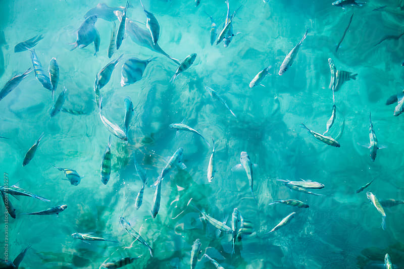 Group of fish in the sea by michela ravasio for Stocksy United
