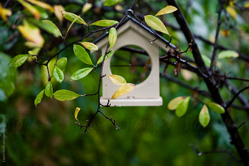 Wooden house shaped birds feeder hanging from Magnolia stellata branches by Laura Stolfi for Stocksy United