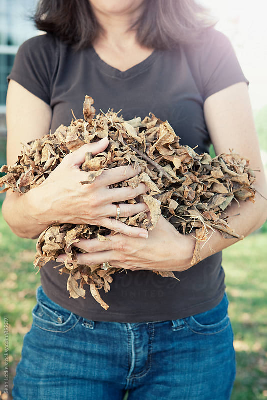 Autumn: Woman Holding Pile of Leaves by Sean Locke for Stocksy United