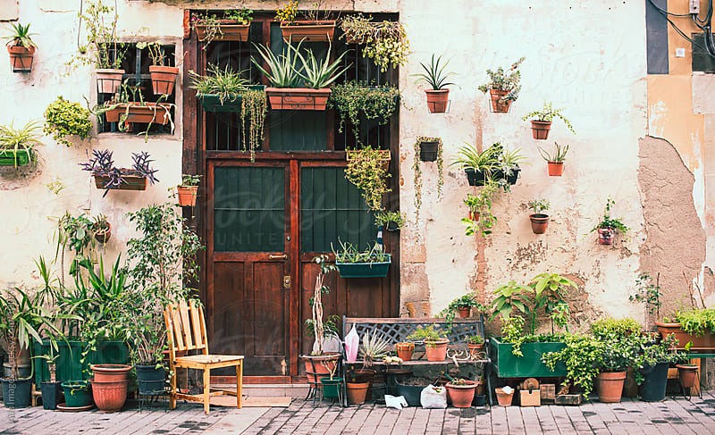 Potted Plant Doorway by Aila Images for Stocksy United
